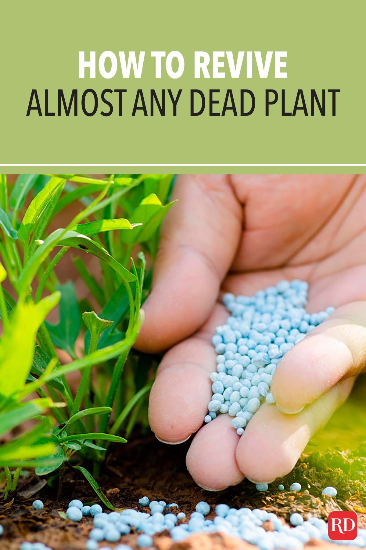 Don T Have A Green Thumb These 7 Hacks Can Revive Almost Any Dead Plant In 2020 Plants Planting Flowers Garden Fertilizer
