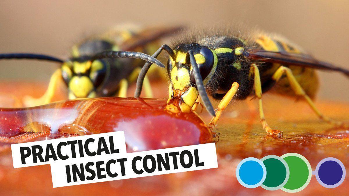 Prime Pest Control (prime_pest) Twitter Pests, Pest