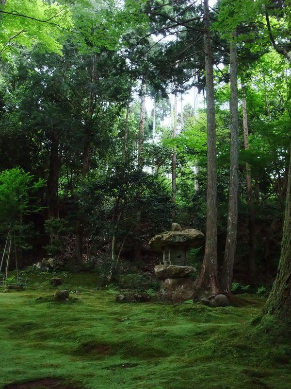 Moss garden sanzen in kyoto japan reisetr ume - Moosgarten kyoto ...