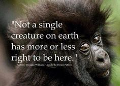 quotes about human and animal testing - Google Search #vegetarianquotes