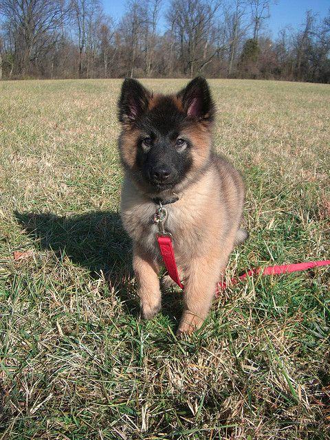 Cool Cuby Chubby Adorable Dog - 2722629610d9fc7f04b7236a4da1b5bc  2018_74276  .jpg