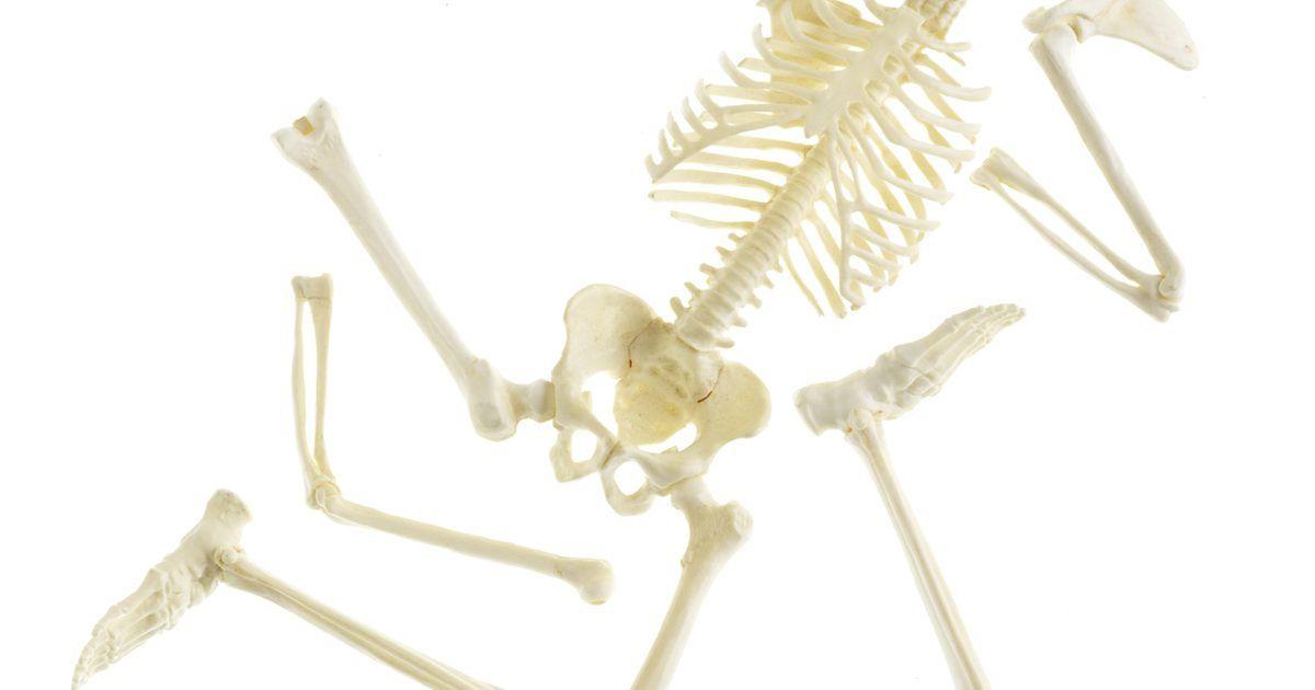 Componentes del esqueleto axial | Esqueleto axial, El esqueleto y El ...