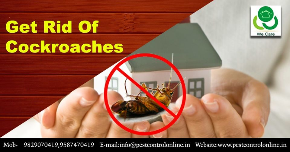 Cockroaches Carry Diseases Give Off Unpleasant Odors Aggravate
