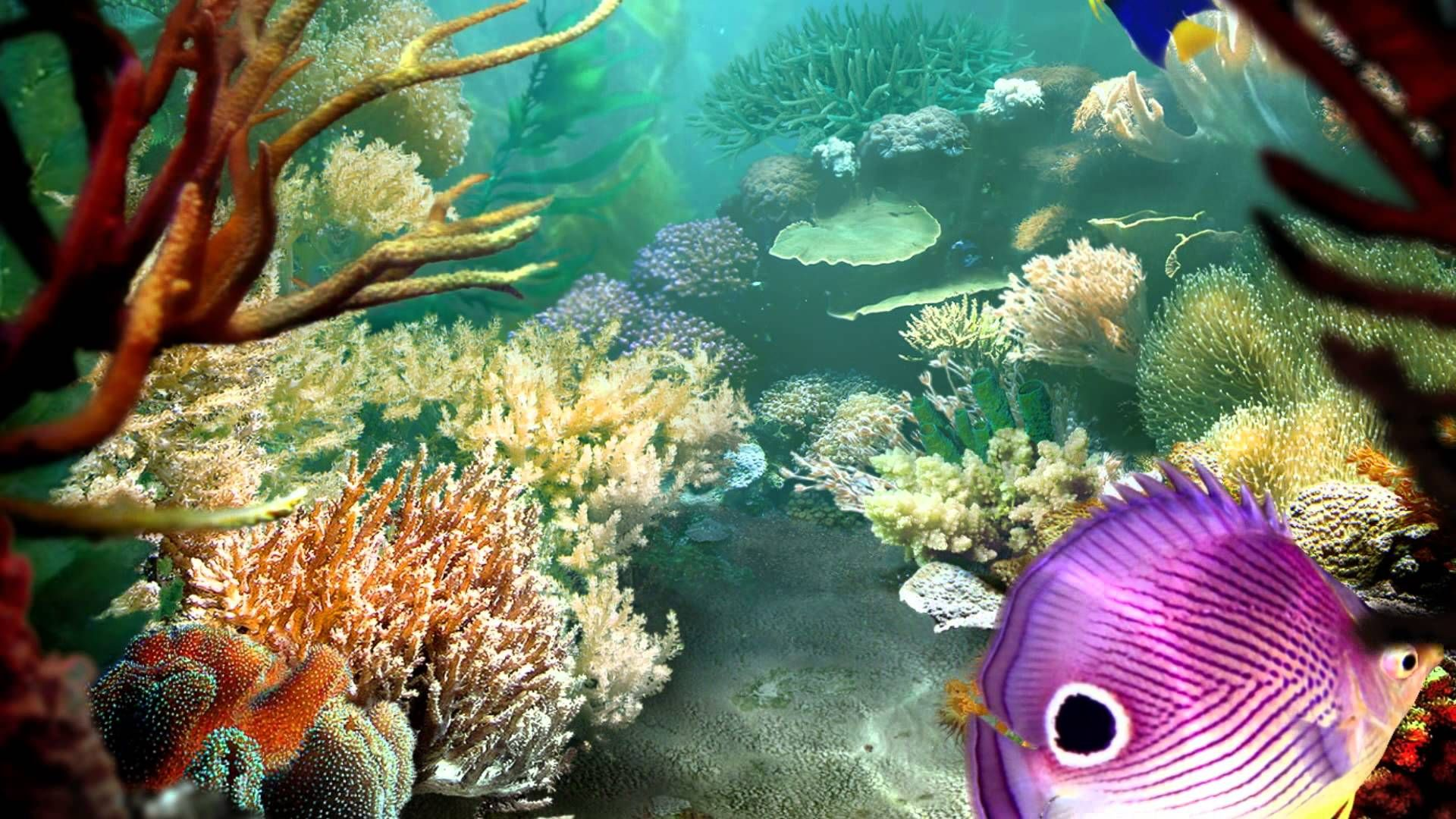 forever seeking - aquarium - 3d screensaver - piano hd 1080p | new