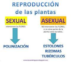 Formas De Reproducci N De Las Plantas Reproduccion De Plantas Plantas Clases De Ciencias
