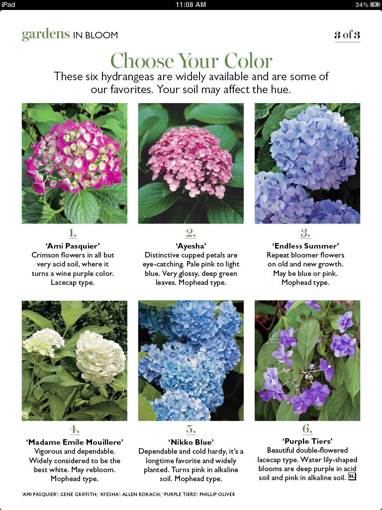 Hydrangea Varieties Hydrangea Varieties Planting Hydrangeas Flower Meanings
