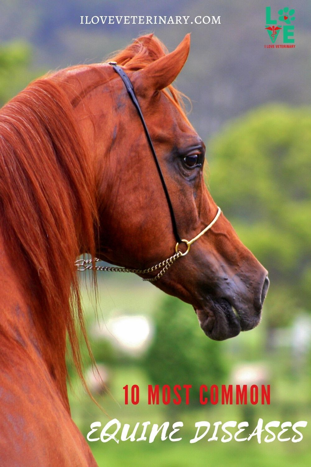 10 Most Common Equine Diseases In 2020 Equines Large Animal Vet Equine Vet Tech