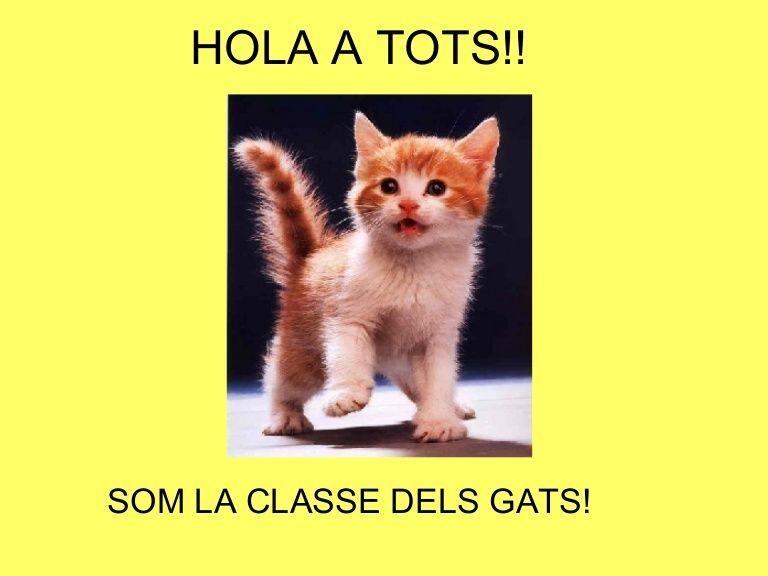 Guión proyecto- HOLA A TOTS!! SOM LA CLASSE DELS GATS! Gatets