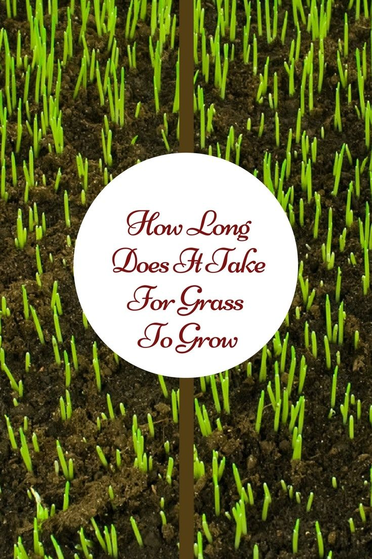 How long does it take for grass to grow growing grass