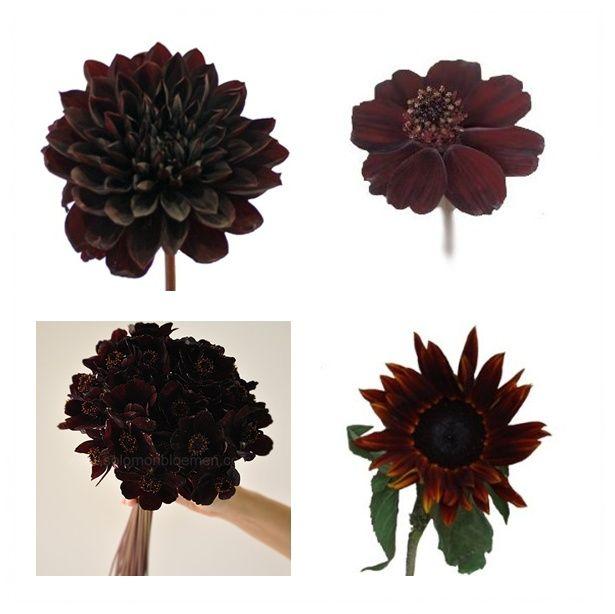 Top Left Dahlia Burgundy Black Flower Top Right Chocolate Cosmos Flower Bottom Left Chocolat Chocolate Cosmos Flower Chocolate Cosmos Red Bouquet Wedding