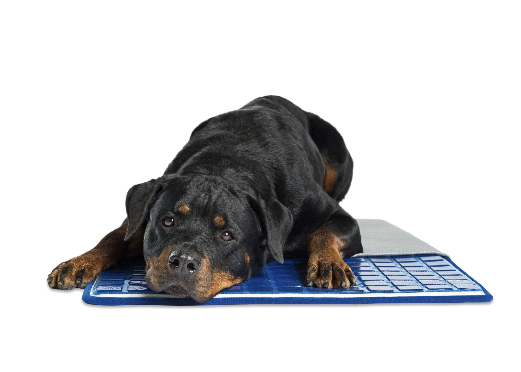 Pawslife Cool Pad In Blue With Images Pet Cooling Pad