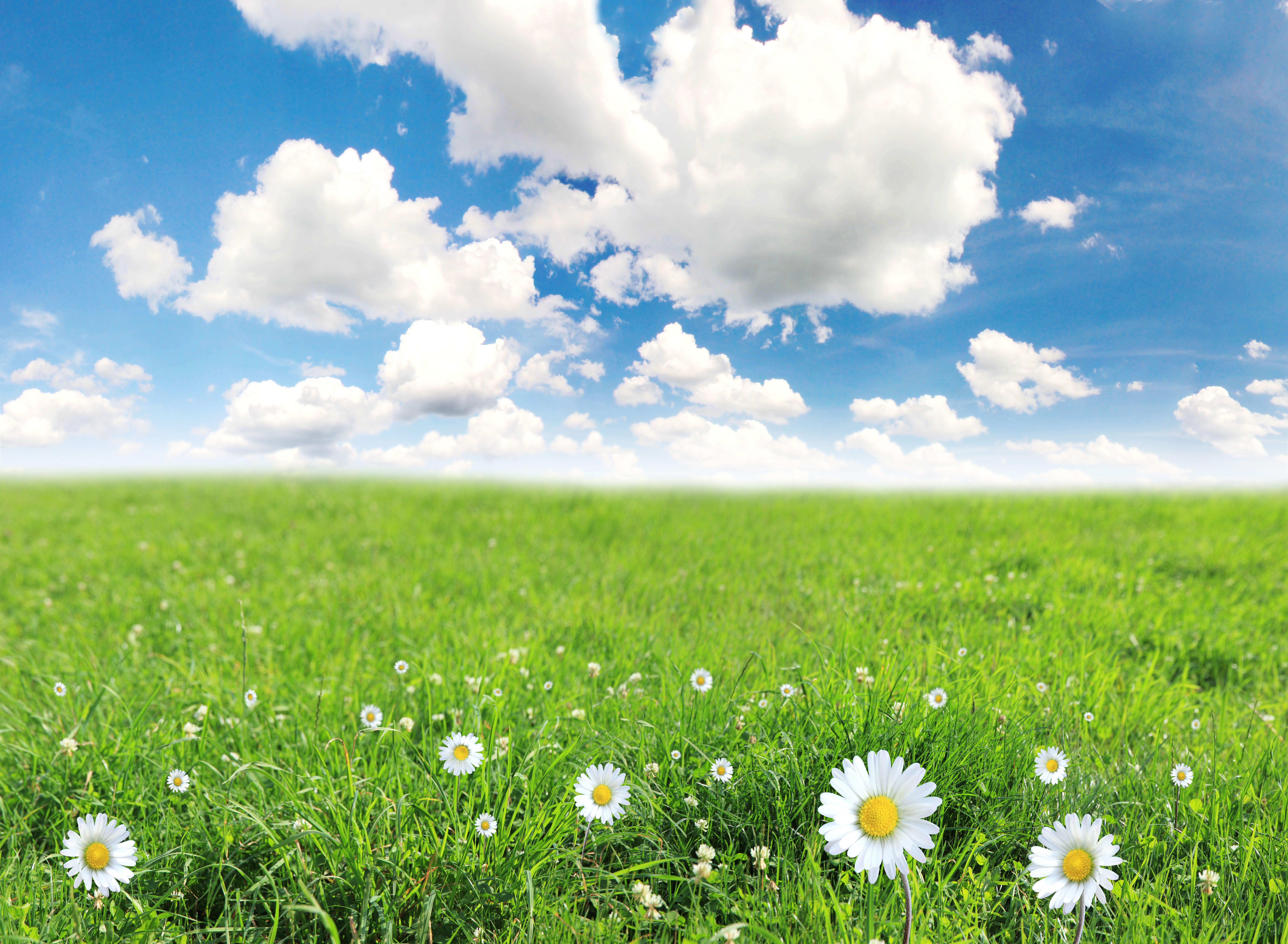 Green grass landscape 3 grasses and landscaping green grass landscape 3 workwithnaturefo