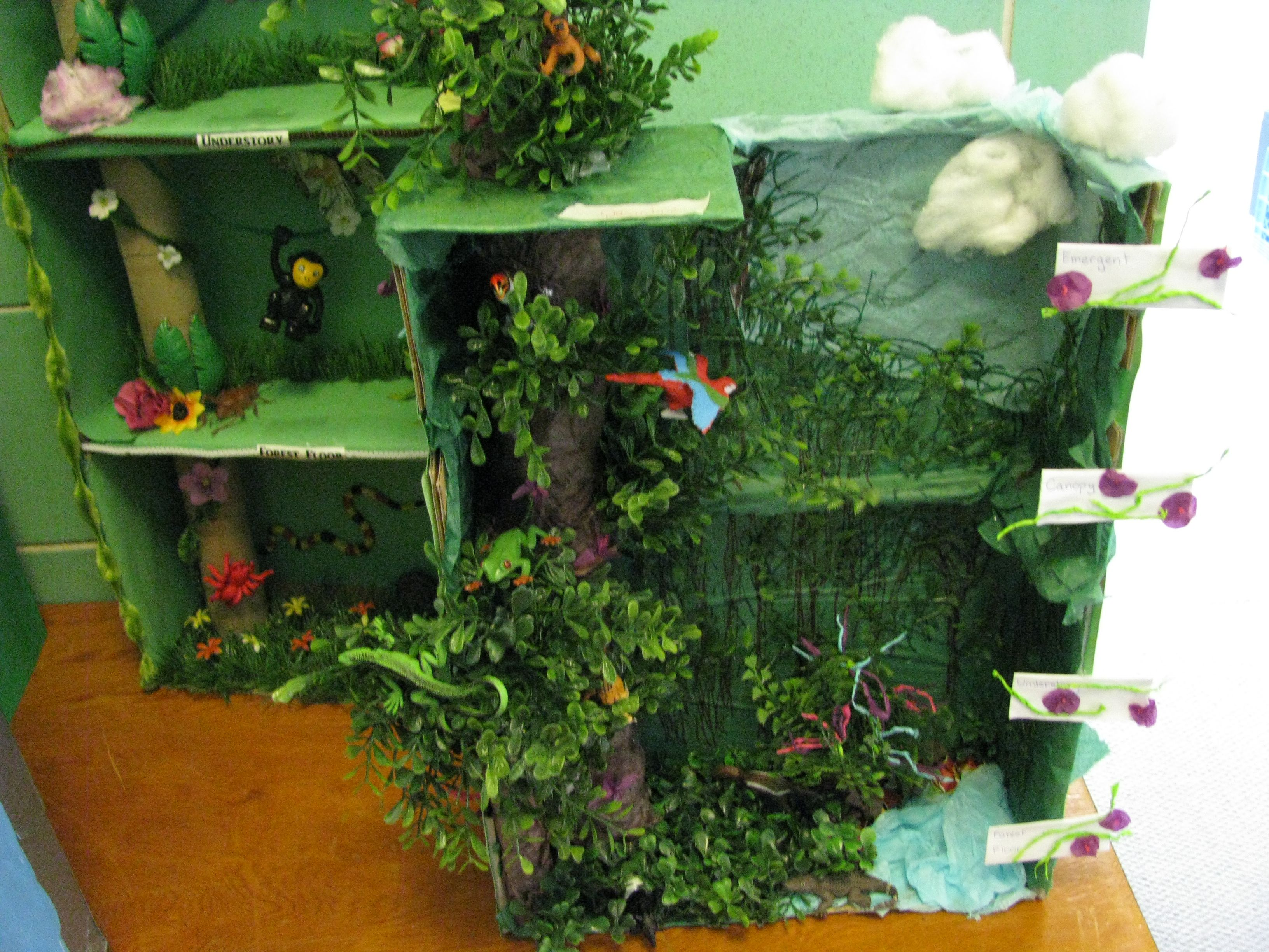 Creating Trees For A Rainforest Biome Box