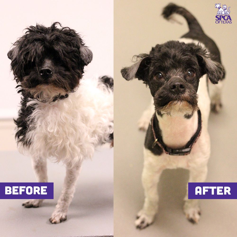 you give a much-needed haircut to a shelter dog. | reasons to give