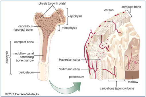 19++ What causes osteoporosis ap ideas in 2021
