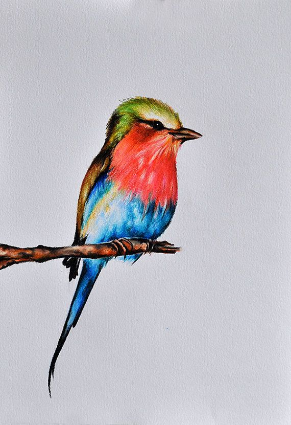 Original Color Lápiz De Dibujo Pintura De Aves Aves Arte 8 X 11