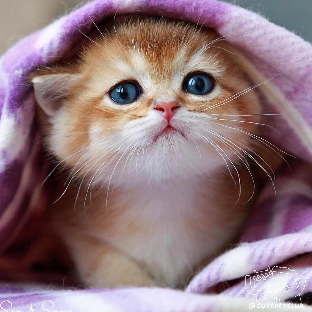 Очень милый кот картинки