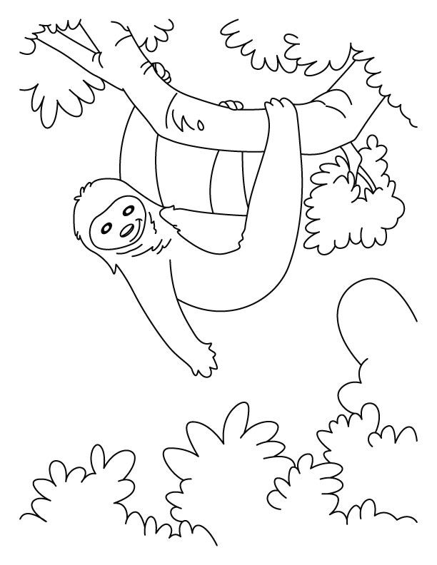 sloth coloring page sloth coloring pages download free hanging sloth coloring pages