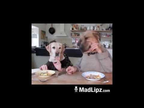 MadLipz.com Whatsapp Deutsch lustige sprechende Tiere 2