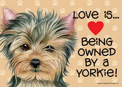 "love yorkies | Details about Love is Being Owned by a Yorkie Puppy 7"" x 5"" Sign - New"