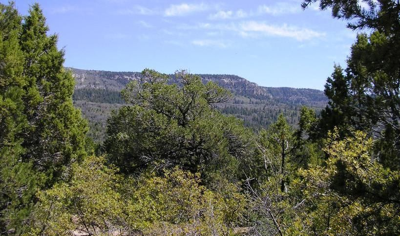 Gorgeous Panoramic Views, Lots Of Pine And Juniper Trees, Great For Hunting, Camping, & Fishing! Corners Of Property Are Clearly Marked, No Utilities Available, Would Make Great Cabin/Rv Lot!
