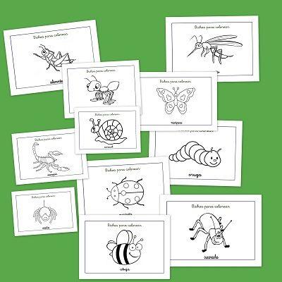 Fichas de insectos y bichos para colorear. Aprende los insectos que ...