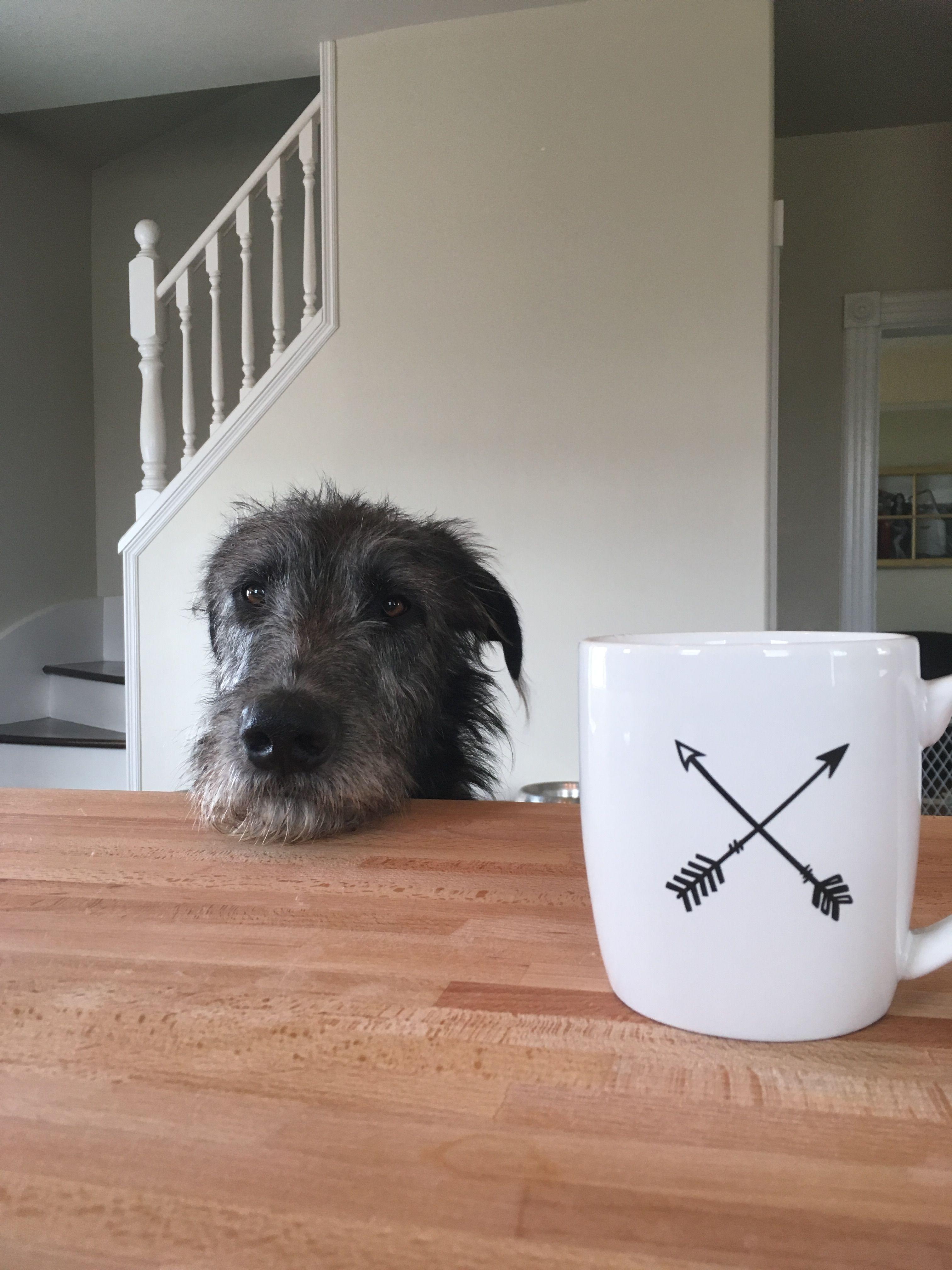 Floki an irish wolfhound puppy irish wolfhound puppies