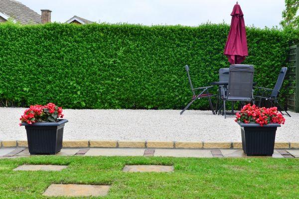 Liguster Ligustrum-Arten (Liguster) gehören zu den am schnellsten - heckenpflanzen