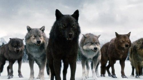 The Twilight Saga Vampires Wolves Photo Twilight Saga Wolves Twilight Wolf Twilight Wolf Pack Twilight