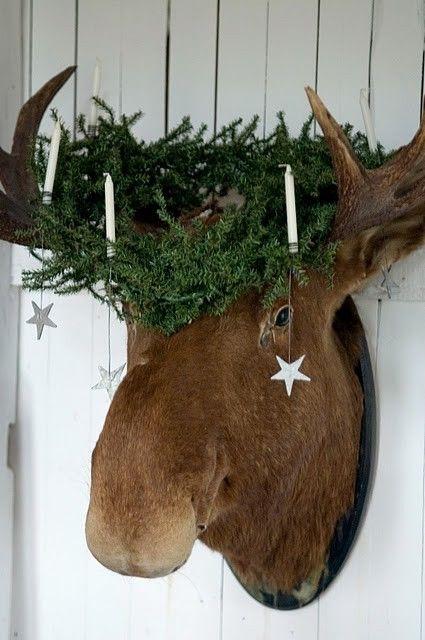 St Lucia Christmas Moose Oh My God!!!!!!! Random Crap - moose christmas decorations