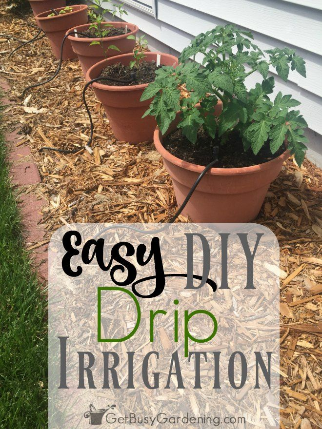 How To Install A Diy Drip Irrigation System For Potted Plants Drip Irrigation Diy Garden Watering System Plant Watering System