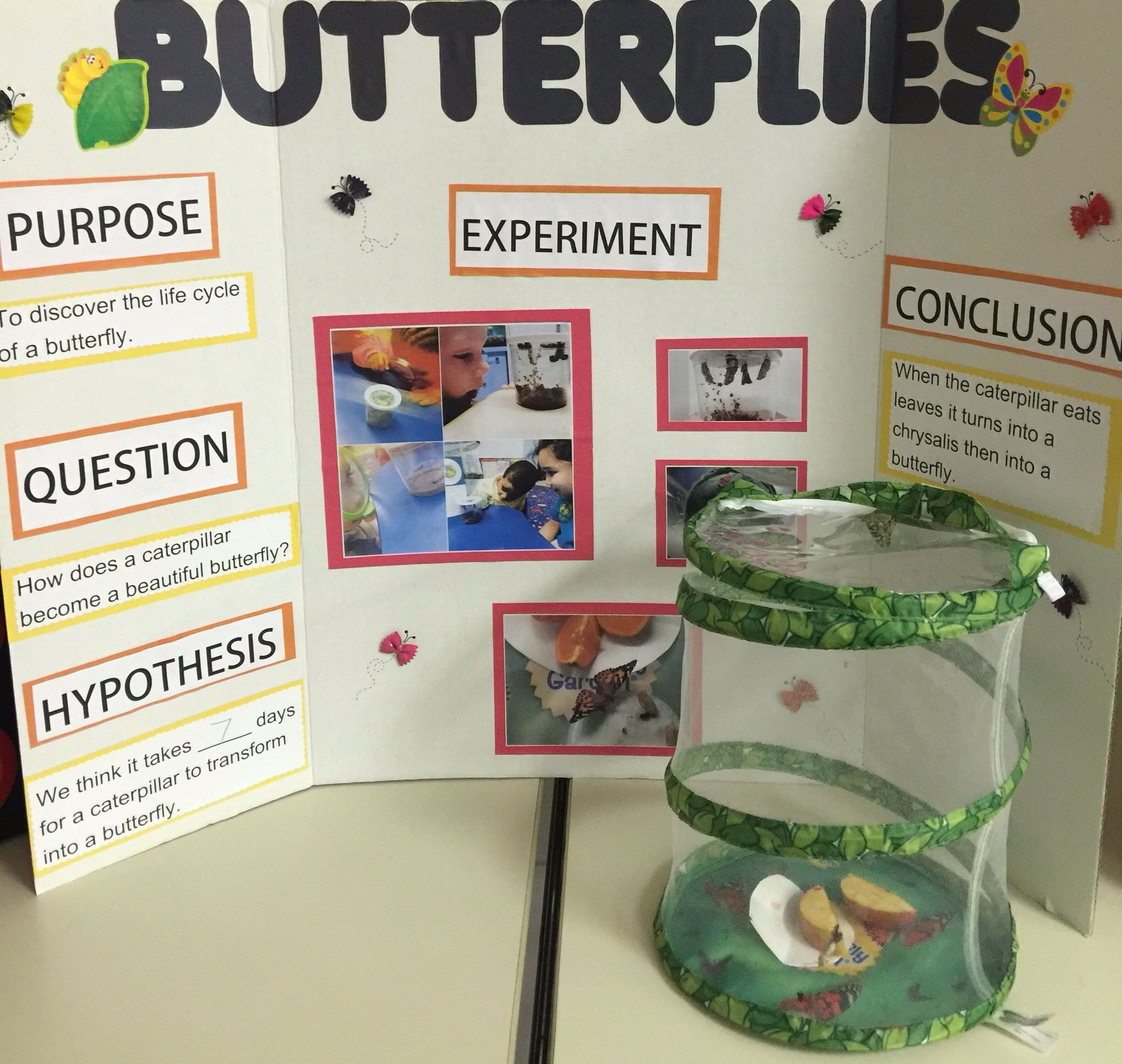 Group Pre K Science Project