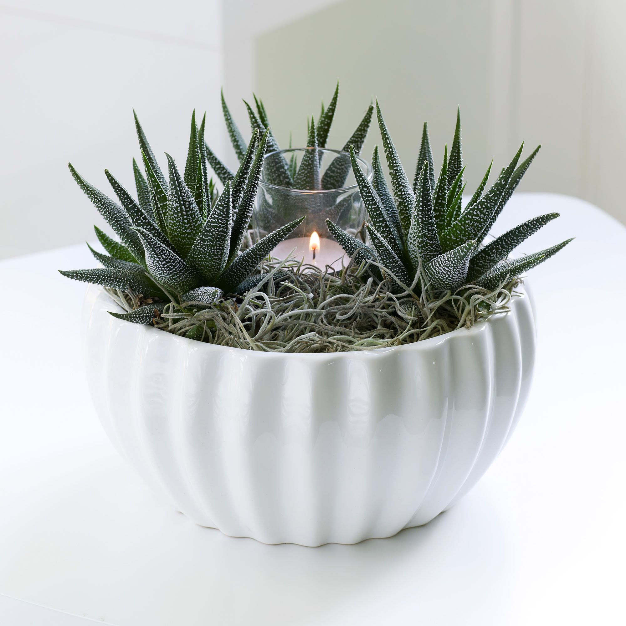 combining three white-specked succulent plants in a forest of grey, Gartengerate ideen