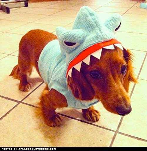 Get You Hyped For Shark Week Pet Costumes Cute Dog Photos Cute