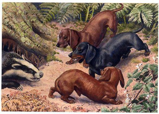 Hunting Dachshunds 623d Hunting Dachshunds C 1950 By Charles