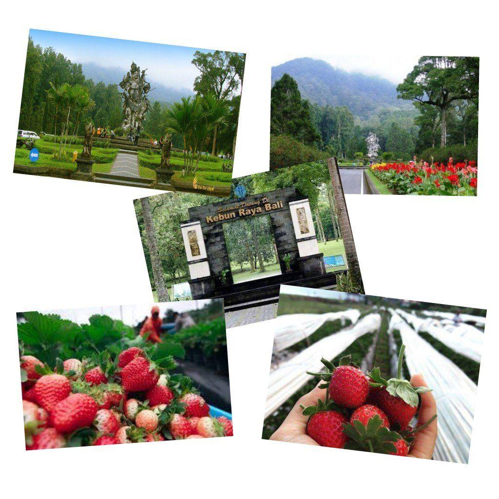 حديقة نباتات Botanical Garden و مزرعة الفراولة Bali Travel Polaroid Film