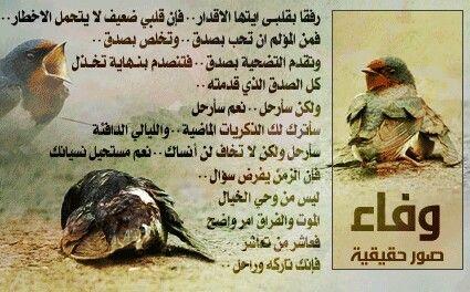 Pin By Mohammed Maherr On خلفيات Photo Animals Poster