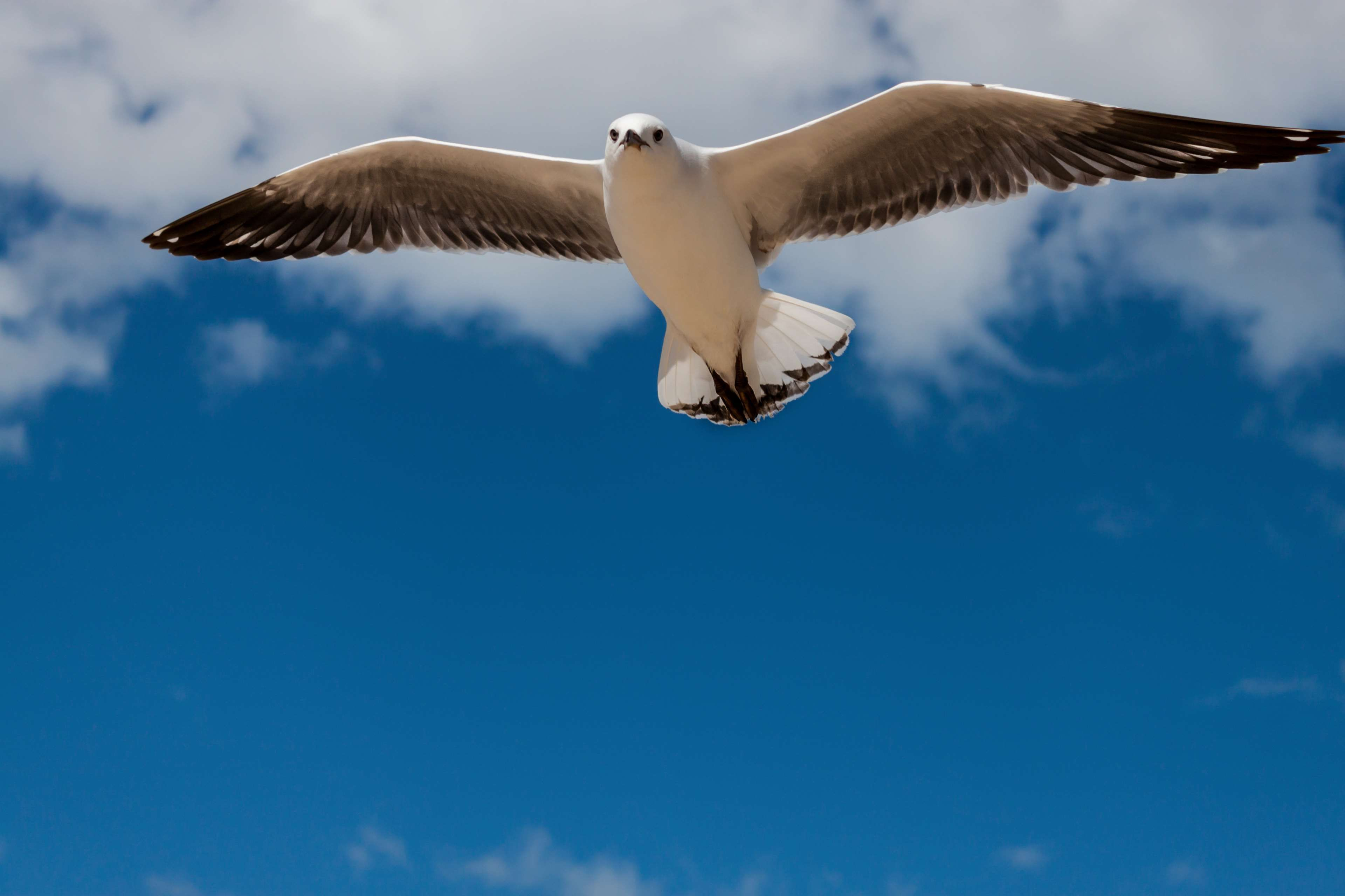 Image result for hovering seagull