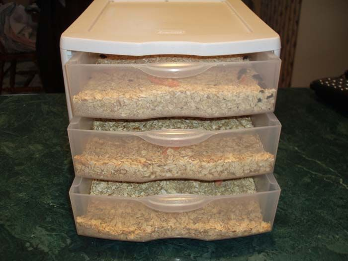 Mealworm breeding farm mealworms pinterest farming for Mealworms for fishing