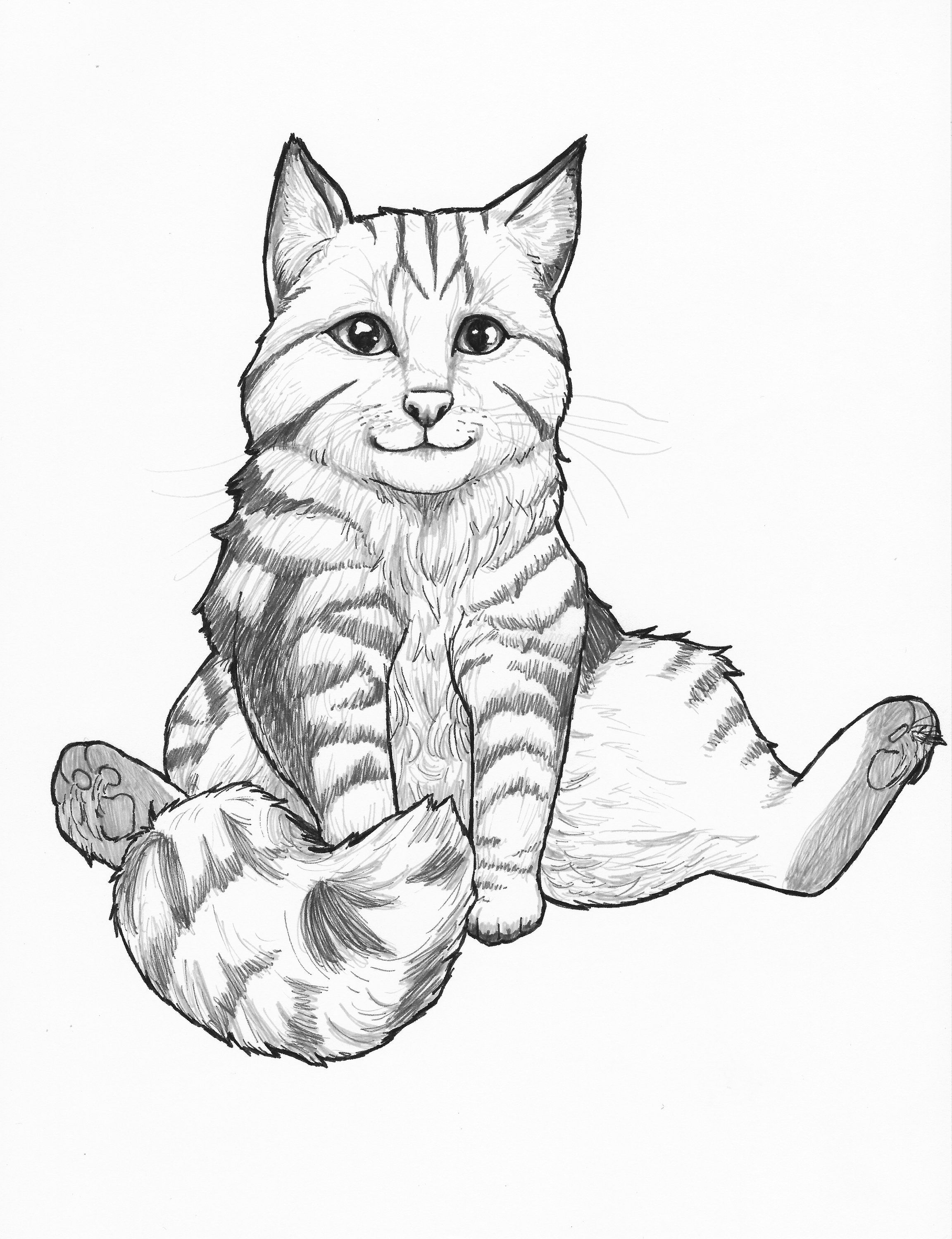 Custom Art Cat Coloring Page Cat Coloring Book Coloring For Kids