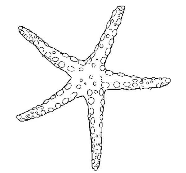 Starfish, : Beautiful Starfish Coloring Page | Moře | Pinterest | Arte