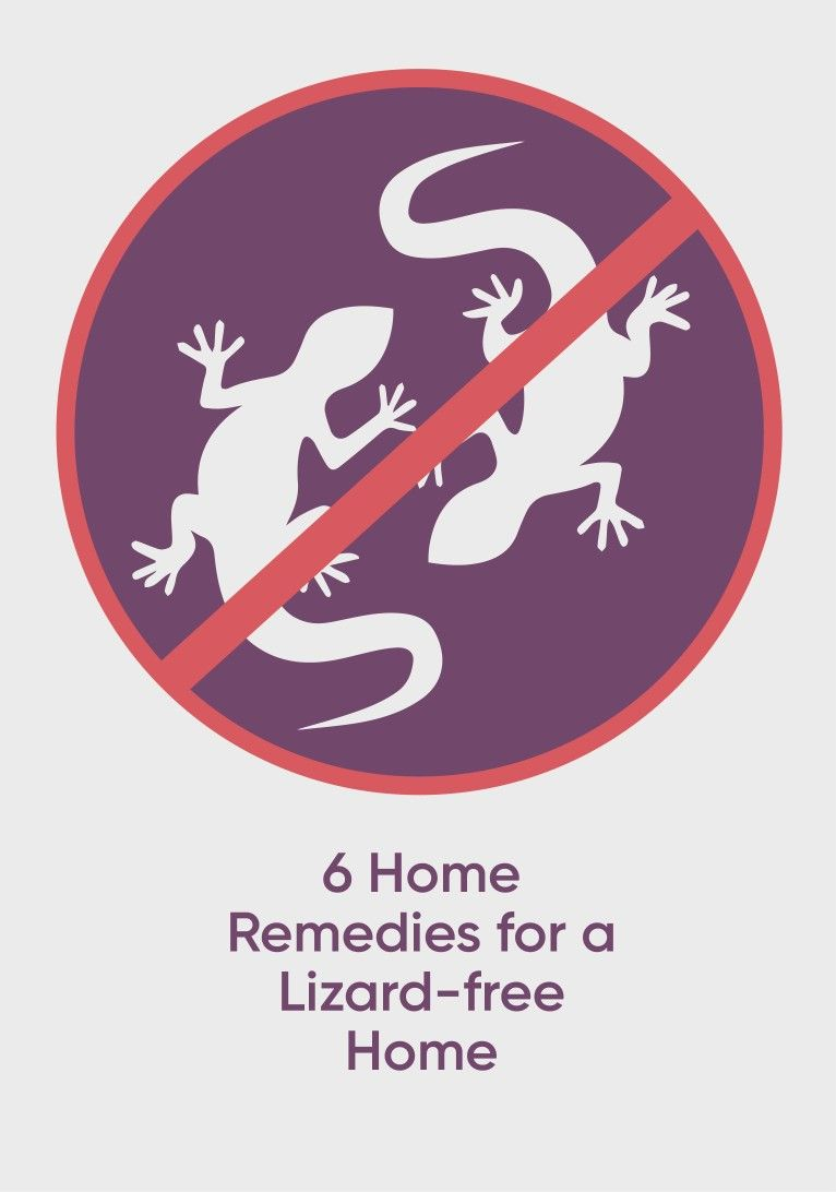 Actionable home remedies to get rid of lizards in 2020