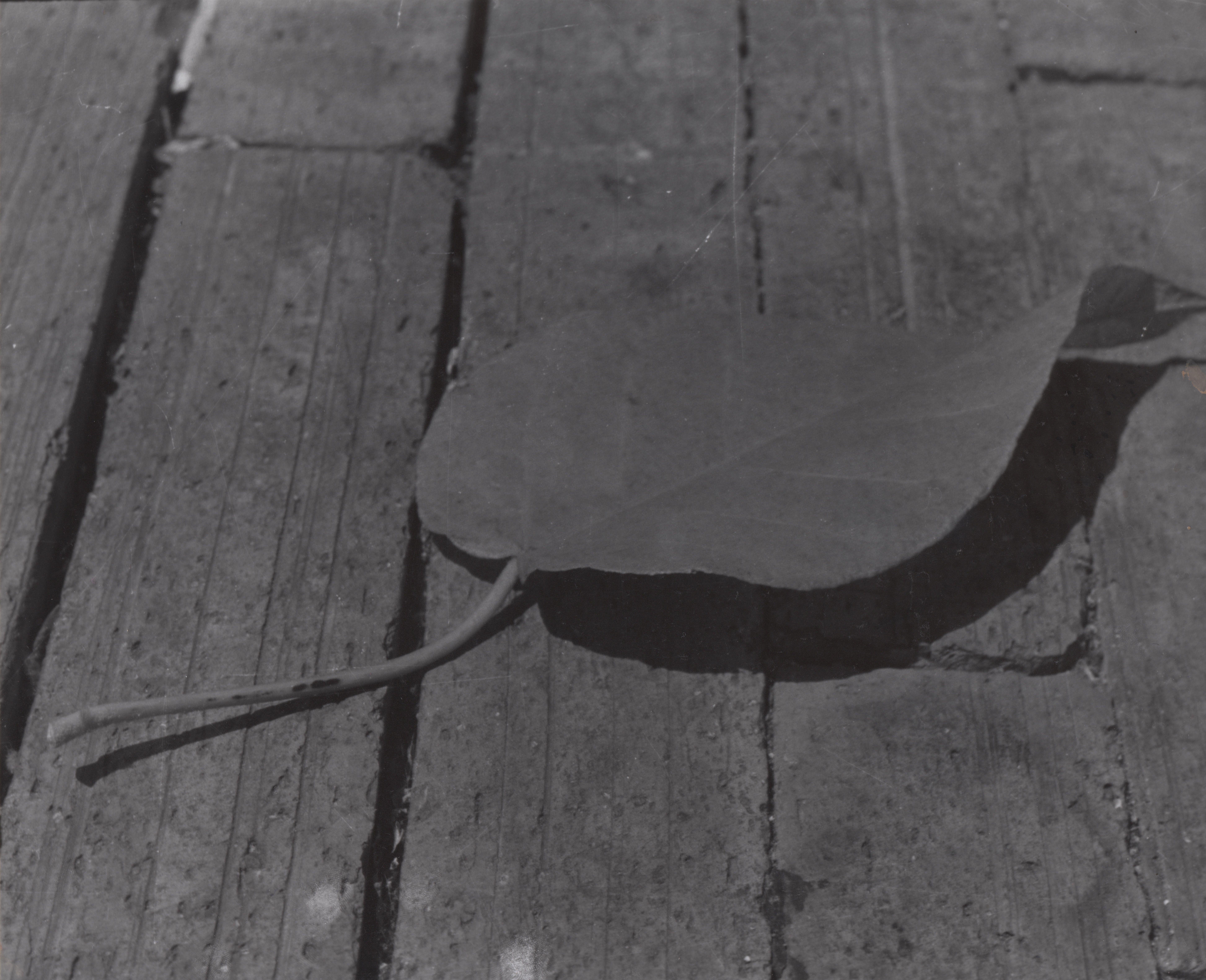 Foto hoja con sombra a blanco y negro con cámara analoga