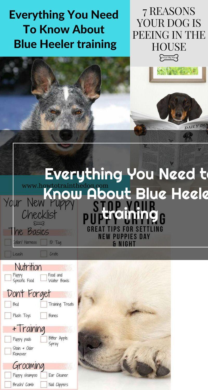 Pin On Training Tips