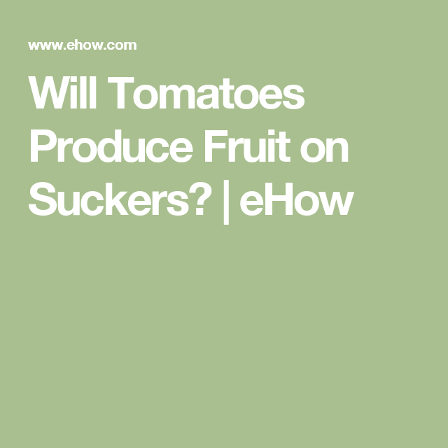 Will Tomatoes Produce Fruit on Suckers?   eHow