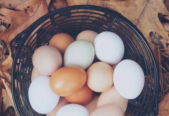 El huevo ha arrastrado durantes muchos años una carga pesada de la que merece desprenderse de una vez por todas.  Antes de sentar al colesterol en el.