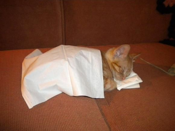 maca u krevetiću:)