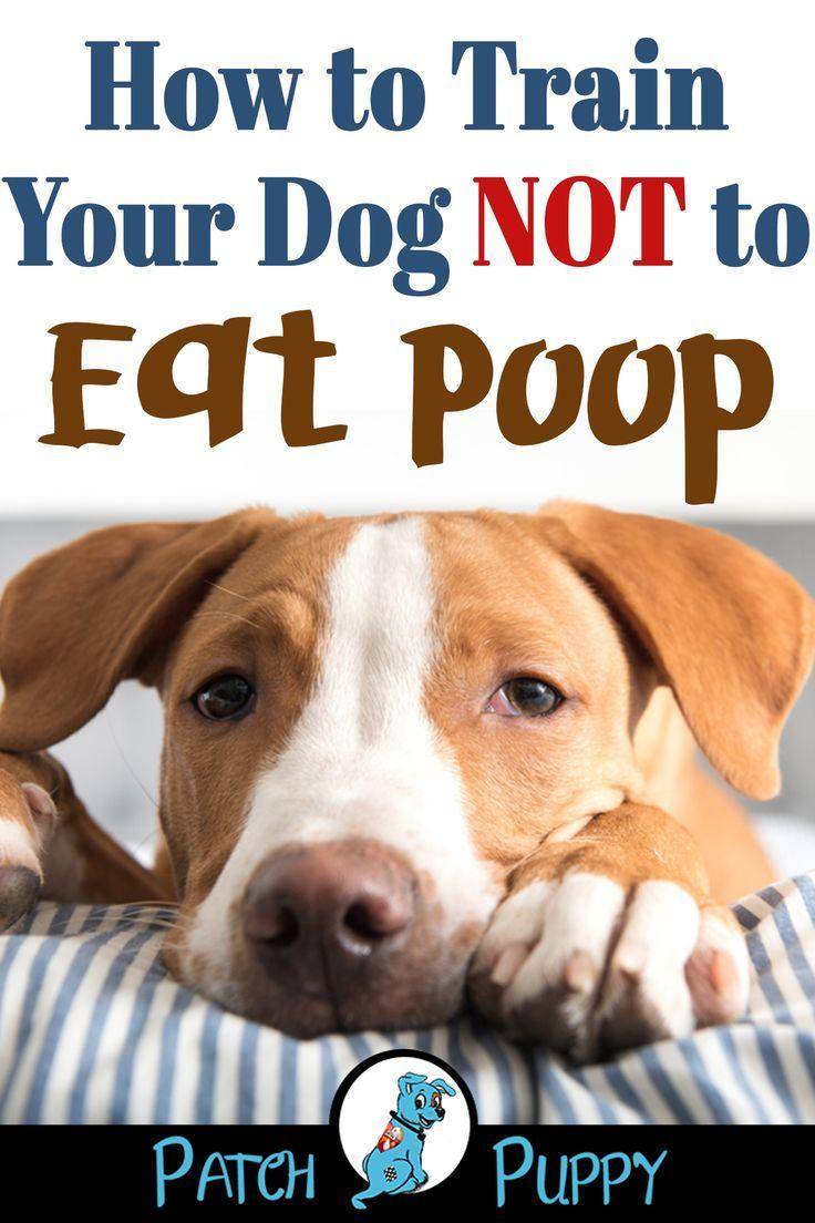 Dog Training 101 How To Train Your Dog Training Your Dog Dog
