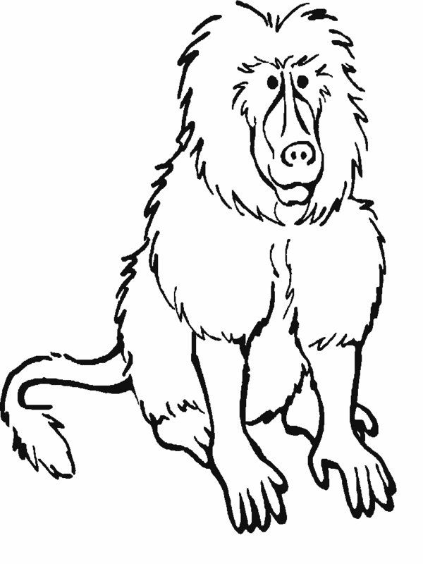 Rainforest Animals Coloring Pages | Printable Rainforest Animal ...