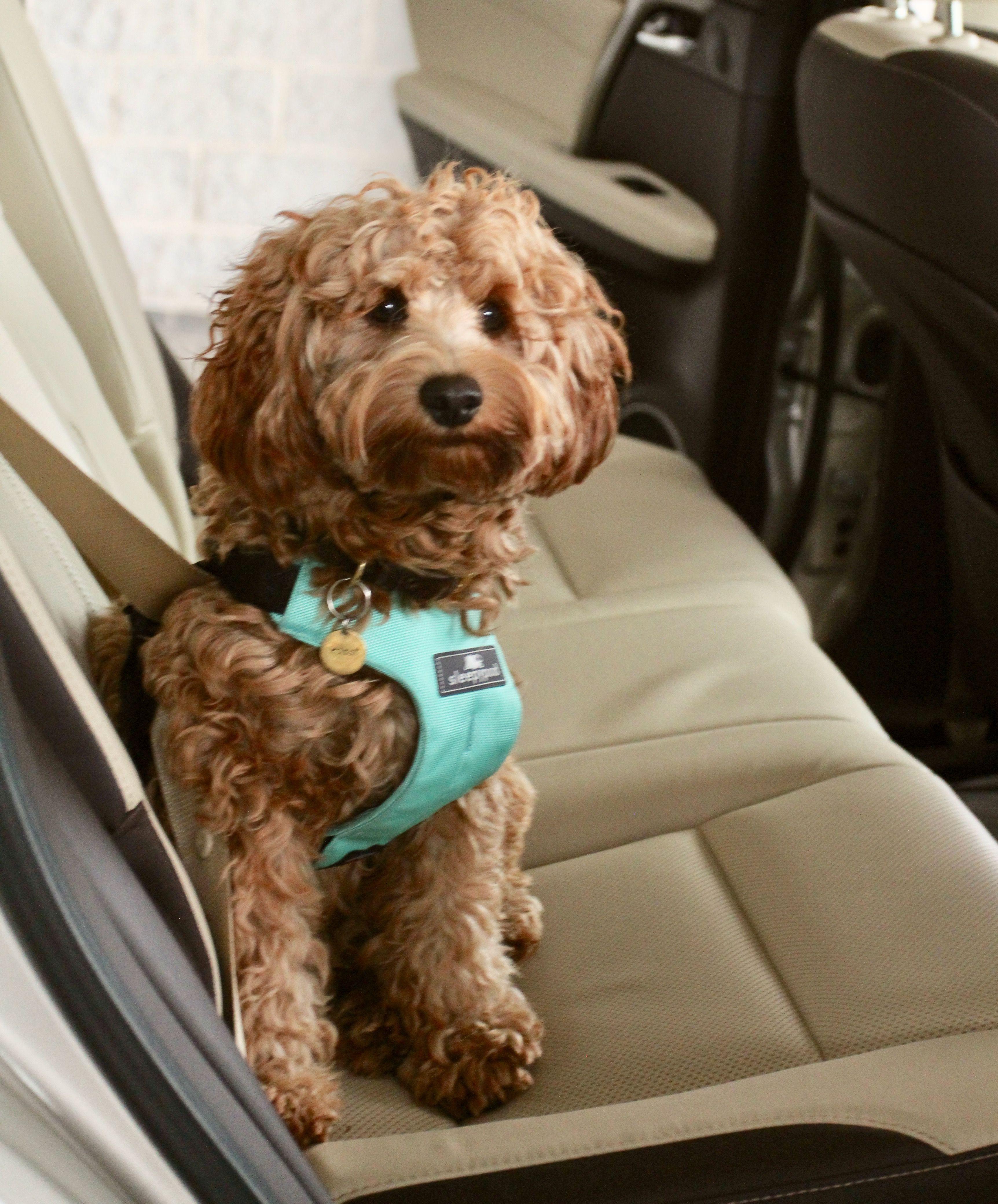 Pin On Pet Travel